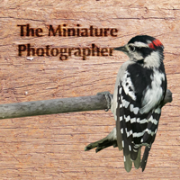 The Miniature Photographer